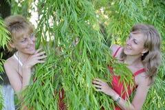Blick mit zwei jungen Frauen wegen der Weidenniederlassungen Lizenzfreie Stockfotografie