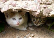 Blick mit zwei obdachloser Kätzchen aus dem Verstecken heraus Lizenzfreie Stockfotografie