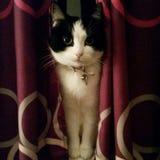 Blick PO - die sitzende Katze Stockbilder