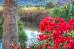 Blick von Temo-Fluss, Sardinien Stockfotografie