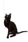 Blicke eines schwarze Kätzchens Stockbild