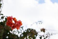 Blicken av en blomma på himlen royaltyfri foto