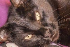 Blicken der schwarzen Katze Stockbilder