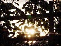 Blicken durch das Trellising an der niedrigen untergehenden Sonne Stockfotos