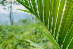 Blicken durch Farnblätter und Dschungelgrün an der Dämmerung mit Sonne Lizenzfreie Stockbilder