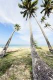 Blickwinkel von Kokosnussbäumen oben schauen Stockbilder