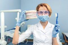 blidka Tandläkare som rymmer en mänsklig käke och tandborste i hand rolig sinnesrörelse Royaltyfri Foto