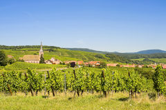 Blienschwiller (Alsace) - Vineyards. Blienschwiller (Bas-Rhin, Alsace, France) - Village and vineyards in a summer morning royalty free stock photography