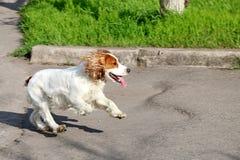 Blije hond Royalty-vrije Stock Afbeelding