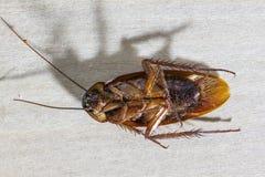 Blijft van dode kakkerlakken de dieren dragers zijn stock fotografie