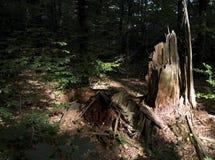 Blijft van een boom Royalty-vrije Stock Foto's