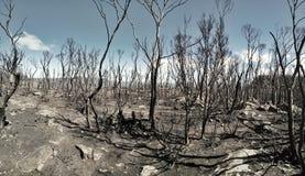 Blijft van een Forrest-brand in Tasmanige Royalty-vrije Stock Afbeelding