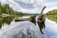 Blijft van Wit Cedar Tree Trunk Resting in de Baai van een Shal Royalty-vrije Stock Foto