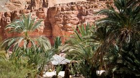 Blijven stilstaan bedouin in een oase in de woestijn onder de bergen in van Zuid- Egypte Dahab Sinai royalty-vrije stock fotografie