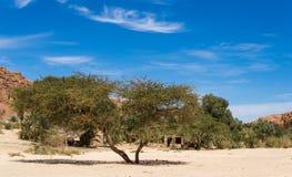 Blijven stilstaan bedouin in een oase in de woestijn onder de bergen in van Zuid- Egypte Dahab Sinai royalty-vrije stock afbeeldingen