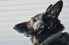 Blik slimme honden op de zon royalty-vrije stock afbeelding