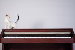 Blind cat playing on a piano Royalty Free Stock Image