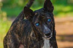 Blind dog Stock Photography