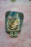 A blind domestic cat is ready to receive the blessing which is to protect them from diseases. Stock Image