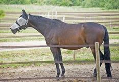 Blind gemachtes Pferd Lizenzfreie Stockfotos