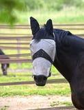 Blind gemachtes Pferd Lizenzfreie Stockbilder