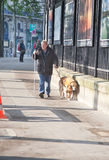 Blind and Guide dog Stock Images