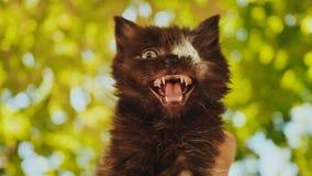 Blind het eenogige katje naden Zonder ogen Een onlangs uitgevoerde chirurgie om het oog te amputeren gehandicapten stock footage