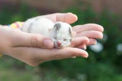 Blind kitten Royalty Free Stock Photo