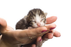 Blind kittens on hand. Blind kittens on hand on white background Royalty Free Stock Images