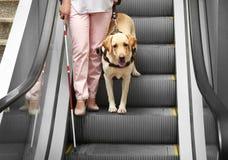 Blind kvinna med handbokhunden arkivfoto