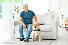 Blind man with guide dog sitting on sofa. At home royalty free stock images