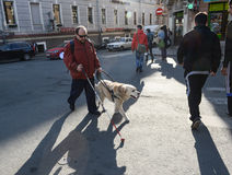 Blind man and guide dog. St. Petersburg, Russia - May 29, 2012: A blind man of 50 years during training walking around the city with the help of a guide dog royalty free stock image