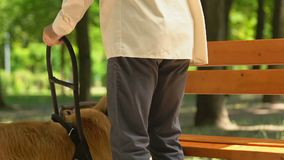 Blind man resting on bench in park stroking friendly guide dog, assistance. Stock footage stock footage