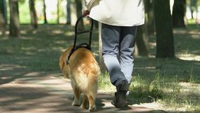 Blind man walking in park with guide dog assistance for visual impairment people. Stock footage stock footage