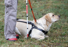 Blind person with her guide dog Stock Image