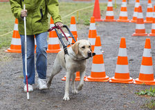 Blind person with her guide dog royalty free stock photo