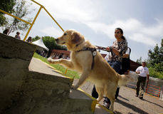 Blind person with his guide dog Stock Photo