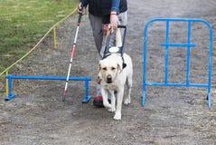Blind person med hennes handbokhund Royaltyfri Bild