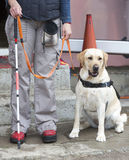 Blind person med hennes handbokhund Arkivbilder