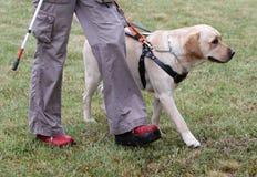 Blind person som går med hennes handbokhund Royaltyfri Bild