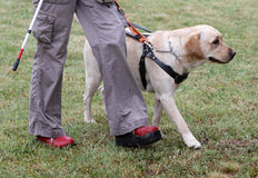 Blind person walking with her guide dog Royalty Free Stock Image