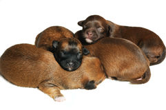 Blind puppies Royalty Free Stock Photography