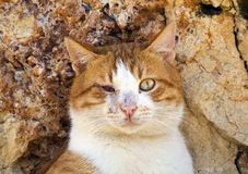Blind street cat. The blind cat is in front of the rocks Royalty Free Stock Photos