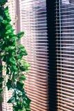 blind växt Royaltyfri Fotografi