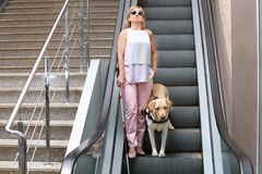 Blind woman with guide dog. On escalator Royalty Free Stock Photo
