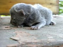 Blinde Cat Cub royalty-vrije stock afbeelding