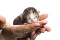 Blinde Kätzchen an Hand. Lizenzfreie Stockbilder