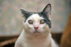 Blinde Kat stock foto's