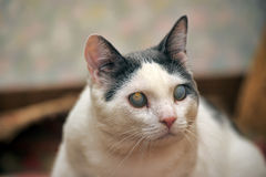 Blinde Kat stock fotografie