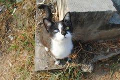 Blinde kattenzwarte stock afbeelding